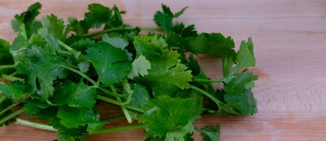 Why Some Like Cilantro & Others Hate It